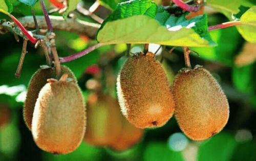 这三种水果会加重老胃病